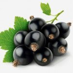 Черешня и вишня при сахарном диабете: какие ягоды можно есть?